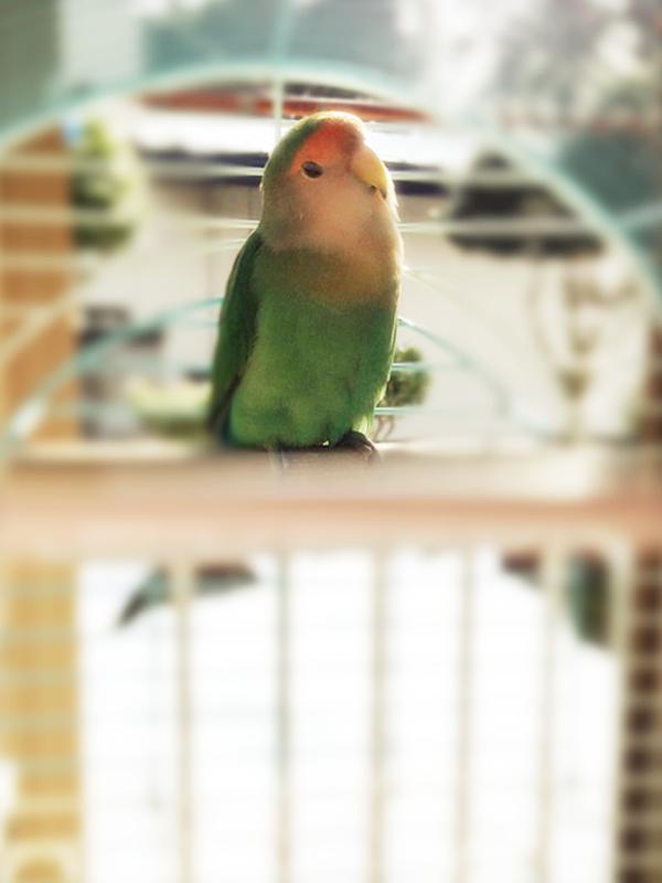 画像:我が家のインコさん冬の日光浴