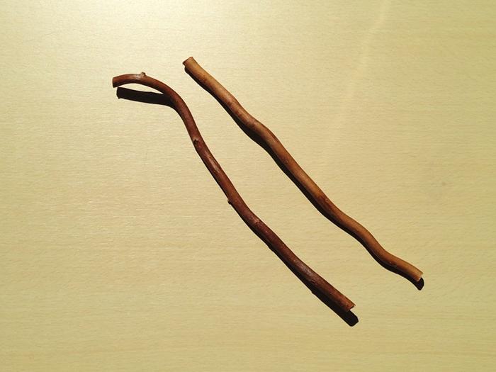 画像:ヤナギの枝